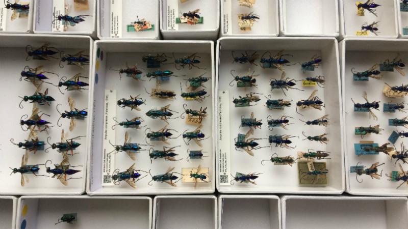 Die neuen Exemplare werden in den Systemkasten ihrer Art einsortiert. Foto: Anne Weißschädel