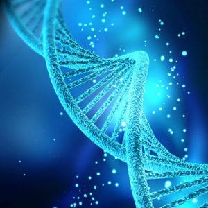 """Das CRISPR/Cas9-System schneidet DNA präzise an einer bestimmten Stelle. So können bestimmte Gene gezielt aus dem Genom, also den Erbinformationen, herausgeschnitten werden. Gene werden dabei verändert und zum Beispiel an der Schnittstelle neue Abschnitte eingefügt.Die Methode ist schneller, präziser und kostengünstiger als bisherige Techniken, mit denen das Erbgut verändert werden kann. Foto: <a href=""""https://commons.wikimedia.org/wiki/File:DNA_com_GGN.jpg"""" target=""""_blank"""" rel=""""noopener""""> Nogas1974</a>, <a href=""""https://creativecommons.org/licenses/by-sa/4.0/deed.en"""">CC BY-SA 4.0</a>"""