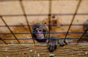 Affe in Käfig