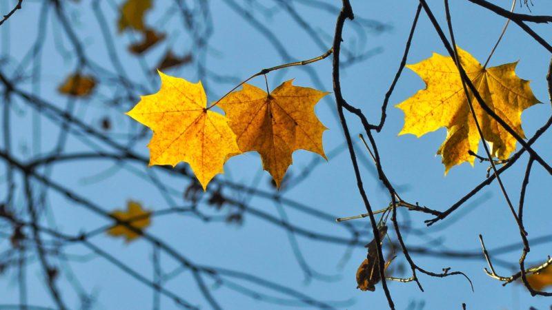 Baumäste mit Blättern